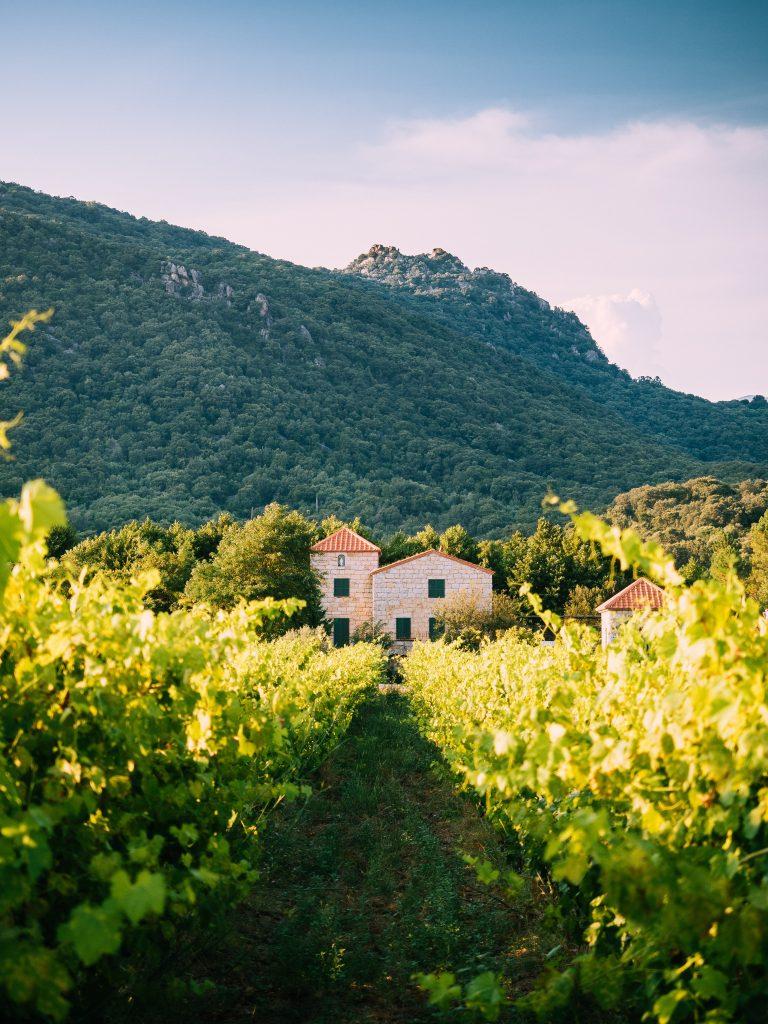 Tradičná francúzska vinica v časti Provensálska.